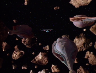 Enterprise leads the baby to other members of it's species